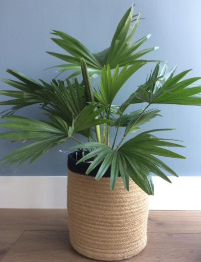 sfstyling verkoopstyling plant