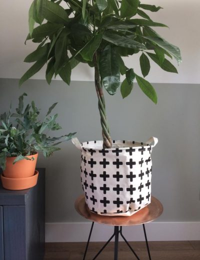 SFStyling plant